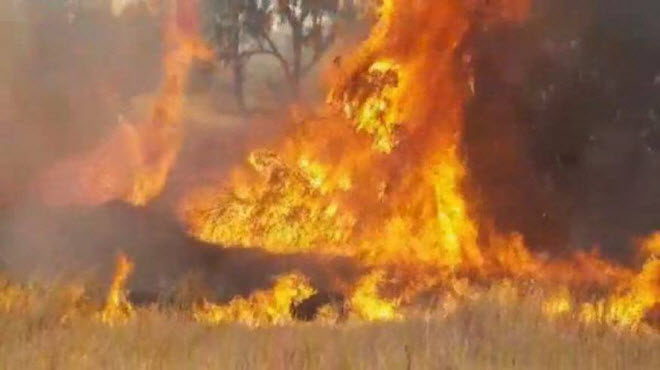 hundreds-of-fires-broke-out-in-israel-due-to-burning-kites-from-gaza
