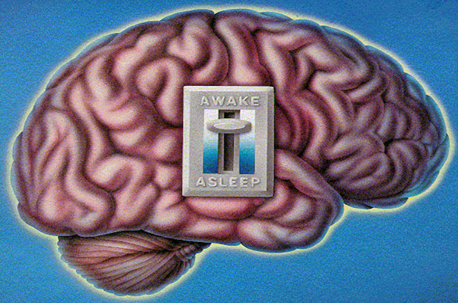 Scientists Finally Discover Human Brain's On/Off Switch